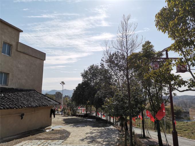 这户贫困户家门前的10余棵树都是巾帼志愿者种的。.jpg