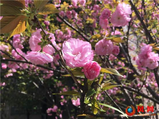 赏花 视力 过敏 结膜炎