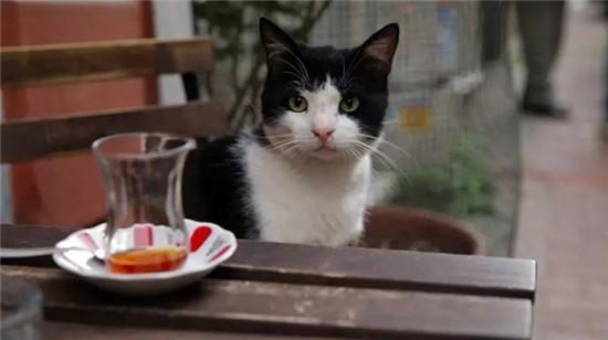 爱猫之城 纪录片